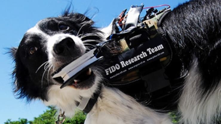 Introducing FIDO - The Wearable Computer For Man's Best Friend 11
