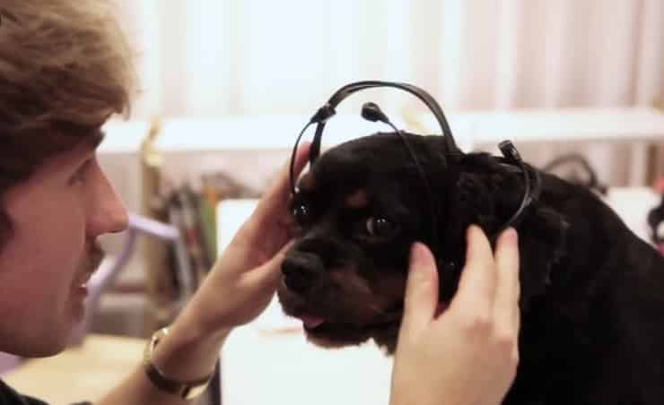This Doggie Headset Reads Your Pooches Mind 5
