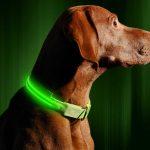 Illumiseen LED Dog Collar 3