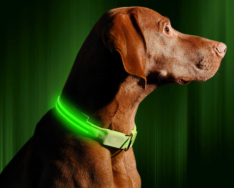 Illumiseen LED Dog Collar 2