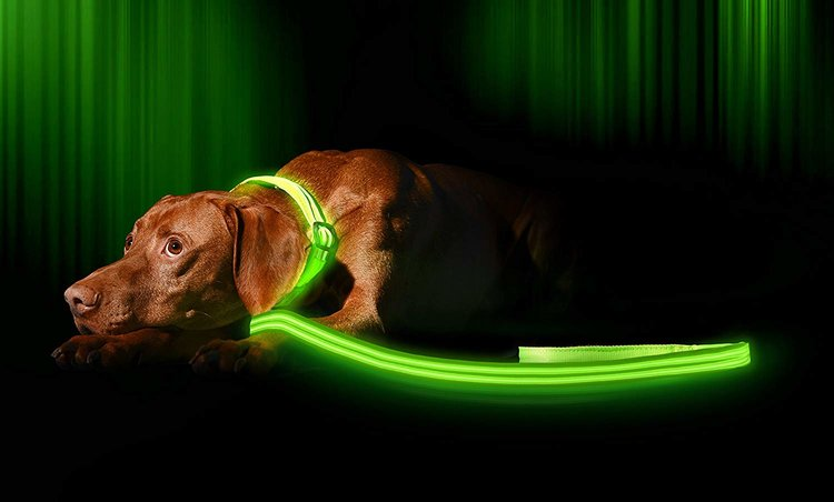 Best LED Dog Collars 2019 Reviews -To Make Your Dog ...