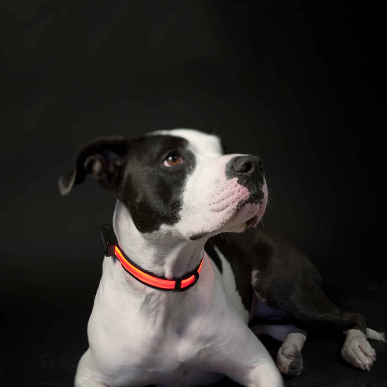LED Safety Dog Collar 12