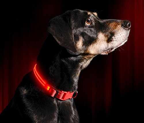 Illumiseen LED Dog Collar - RUBY RED