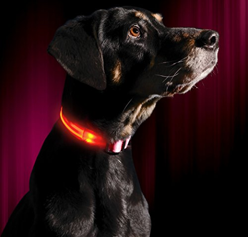 Illumiseen LED Dog Collar - COTTON CANDY PINK