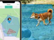 5 Cat GPS Trackers You Should See - Slash Pets