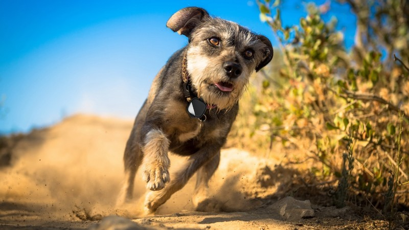 Best GPS Trackers for Cats and Dogs in 2020 | iMore