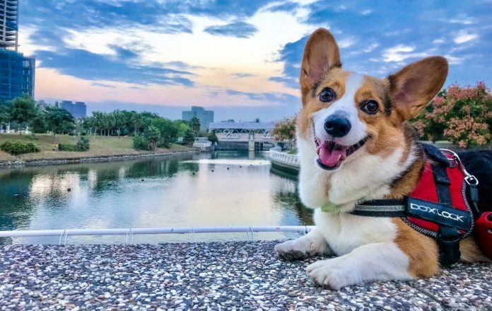 Petfon Is a GPS Pet Tracker with No Monthly Costs to It ...