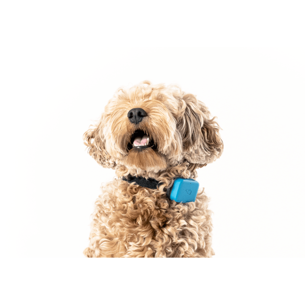 Whistle GO Dog GPS Tracking Device and Pet Health Monitoring System Compatible With Twist & Go Dog Tracking Collar, Blue