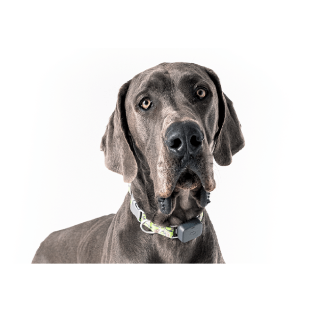 Whistle GO Explore Dog GPS Tracking Device and Pet Health Monitoring, Grey
