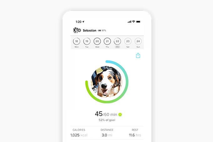 Whistle Go Explore GPS Pet Tracker | HiConsumption
