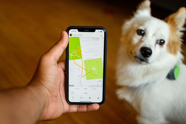 Whistle Go Explore Impressions: A Smarter Pet Tracker ...