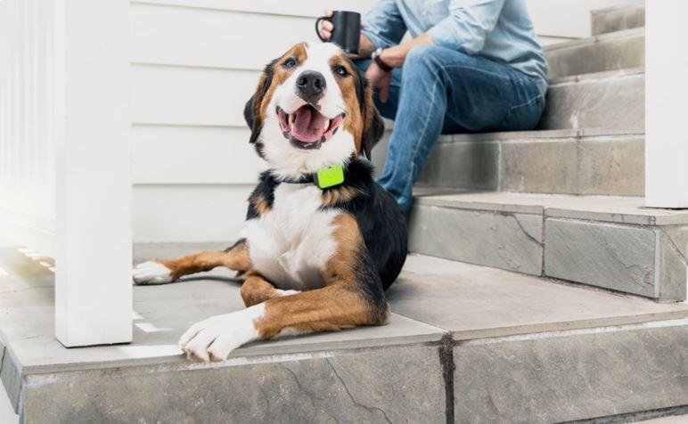 Whistle Go Explore Pet Location Tracker - Your Tech Space.com